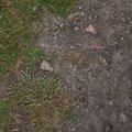 Soil 020