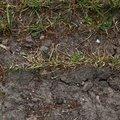 Soil 022
