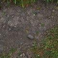Soil 019