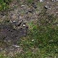 Soil Stoned 027