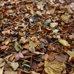 Ground Leaves