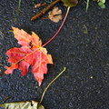 Ground Leaves 003