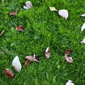 Ground Leaves 005