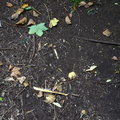 Ground Leaves 006