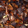 Ground Leaves 009