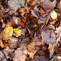 Ground Leaves 010