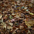Ground Leaves 013