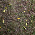 Ground Leaves 001
