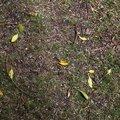Ground Leaves 001