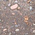 Soil Stoned 032