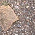 Soil Stoned 031