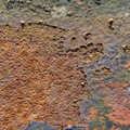 Rust Painted 055