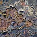 Rust Painted 058