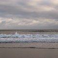 Sea Edge 013