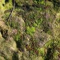 Nature Lichen 051
