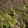 Nature Lichen 052