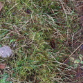 Nature Moss 028