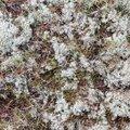 Nature Moss 029