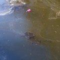 Debris Water 008