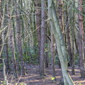 Nature Forest 012