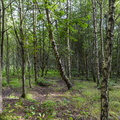 Nature Forest 002