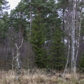 Nature Forest 005