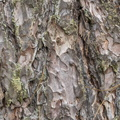 Nature Tree Trunk 070