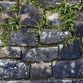 Wall Stone Bricks 029
