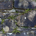 Wall Stone Bricks 030