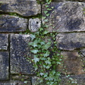 Wall Stone Bricks 028