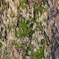 Nature Tree Trunk 088
