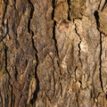 Nature Tree Trunk 089