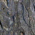 Nature Tree Trunk 092
