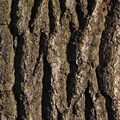 Nature Tree Trunk 094