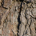 Nature Tree Trunk 097