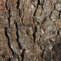 Nature Tree Trunk 098