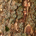Nature Tree Trunk 099