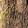 Nature Tree Trunk 100