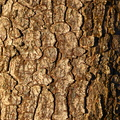 Nature Tree Trunk 105