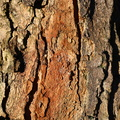 Nature Tree Trunk 107