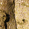 Nature Tree Trunk 110