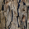 Nature Tree Trunk 111