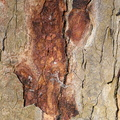 Nature Tree Trunk 112