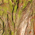 Nature Tree Trunk 113