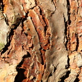 Nature Tree Trunk 114