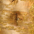 Nature Tree Trunk 080