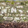 Wall Stone 078