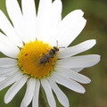 Fauna Insects 040