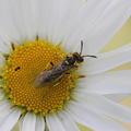 Fauna Insects 041