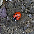 Fauna Insects 001